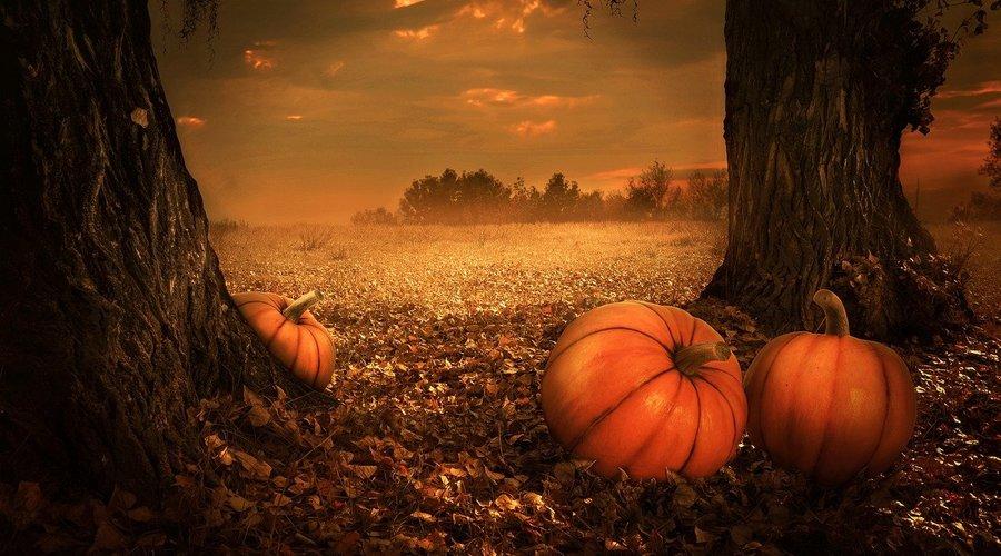 Detail pumpkins 5675502 1280