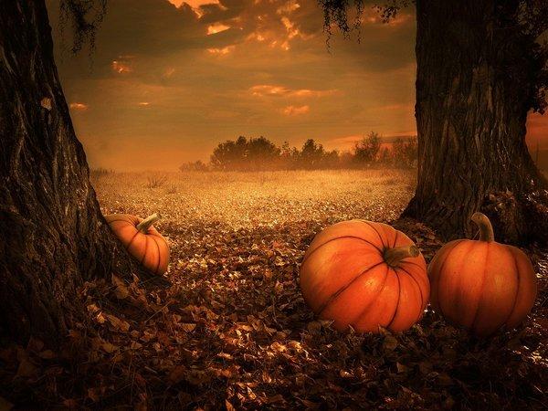 List pumpkins 5675502 1280