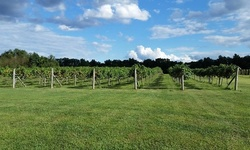 Cheese Platter and Wine Tasting for Two or Four at Wight-Meyer Vineyard & Winery (Up to 55% Off)