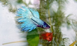 Pets, Supplies, or Betta Fish at Aqua World (Up to 66% Off). Three Options Available.
