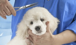 Up to 40% Off on Pet - Grooming / Salon at Diamond Collar Dog Spa