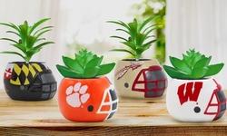 """Sporticulture NCAA Team Pride 3"""" Ceramic Helmet Succulent Planter"""