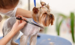 Dog Grooming at Cosmic Canine Training (Up to 33% Off). Three Options Available.
