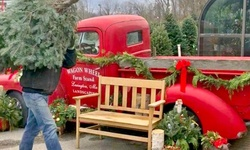 $49 for One Fraser Fir or Balsam Christmas Tree at Wagon Wheel Nursery and Farmstand ($100 Value)