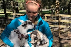 Goat Yoga Experience in Dade City