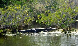 Private Wildlife Tour for Up to Five or Ten with Optional Lunch from Canaveral Wildlife Tours (Up to 10% Off)