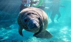 $200 for Private Manatee Tour for Six at Manatee Tour and Dive ($450 Value)