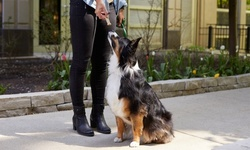 Up to 63% Off on Online Pet Care Course at Maynard Dog Training Solutions LLC