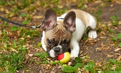 Up to 50% Off on Pet - Daycare at Hand in Paw Pet Services