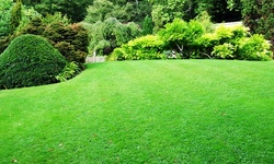 Up to 50% Off on Lawn Mowing Service at Bloodline Lawn Care