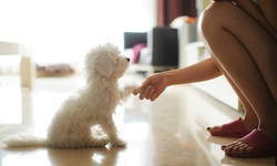 Up to 40% Off on Puppy Kindergarten at Cosmic Canine Training