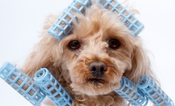 Up to 50% Off on Pet - Grooming / Salon at Dog Groomer Academy