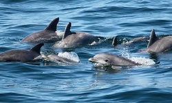 Book Now: Whale-Watching Tour for One from Cape May Whale Watch & Research Center (Up to 32% Off).