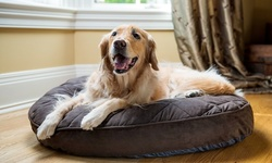 Up to 20% Off on Pet Store (Retail) at Diamond Collar Dog Spa