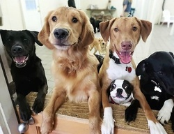 $76 for Five Days of Doggy Day Camp at Best Friends Pet Hotel ($140 Value)