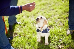 Up to 70% Off on Online Pet Care Course at Alpha Academy