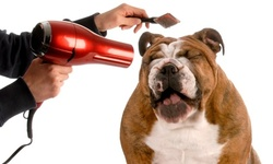 Up to 49% Off on Pet - Grooming / Salon at Sun Kissed Pet Palace