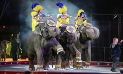 Carden Circus Spectacular on November 1 at 6:30 p.m.