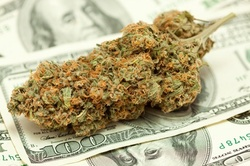 Up to 90% Off on ELearning Class Growing Marijuana for Beginners