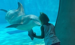 SIngle-Day Admission for One Child, Adult, or Senior at Clearwater Marine Aquarium (Up to 7% Off)