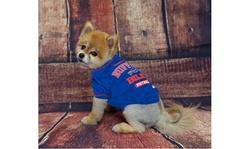 NFL Pet T-Shirts Teams A-I