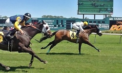 Day at the Races for One, Two, Four, or Six at Tampa Bay Downs (Up to 66% Off)